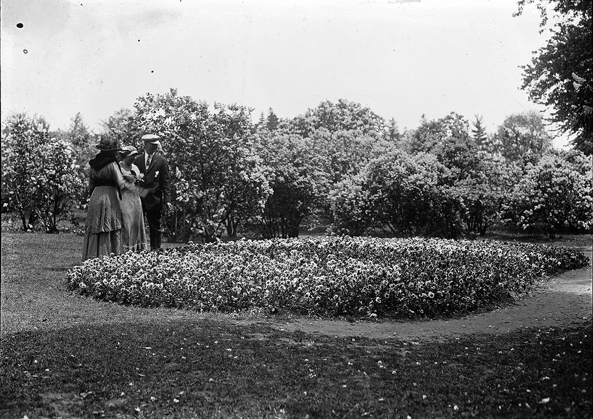 Visitors by the Highland Park pansy bed