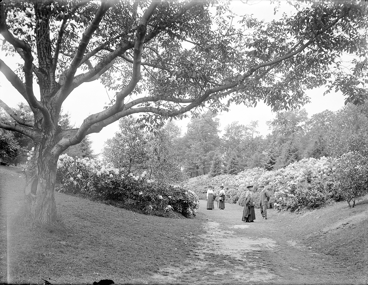 Visitors enjoying Rhododendrons in Highland Park