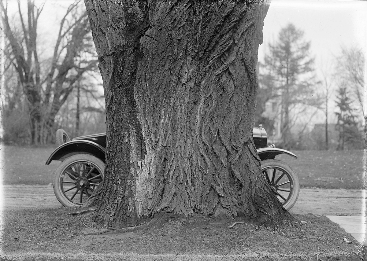 Parked automobile behind tree