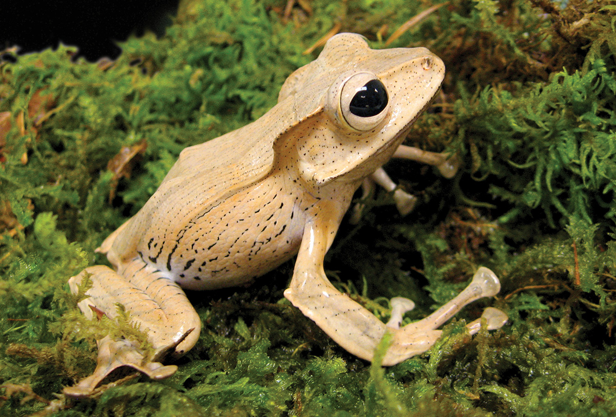Frogs: A Chorus of Colors - Rochester Museum & Science Center