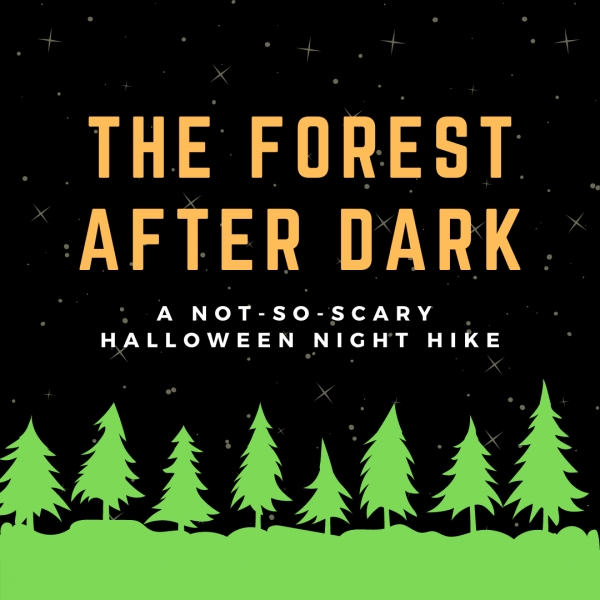The Forest After Dark - SOLD OUT